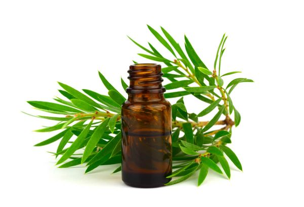 Tea Tree Oil for Dogs: Is it Toxic or Safe?