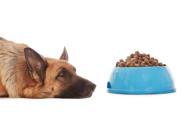 My Dog Won't Eat: 10 Reasons Explained
