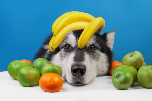 What Fruits Can Dogs Eat? 12 Safe Options