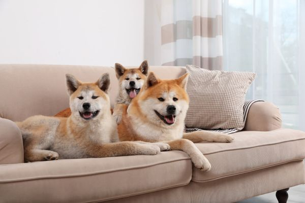 How To Keep Dogs Off Furniture: 5 Amazing Tips