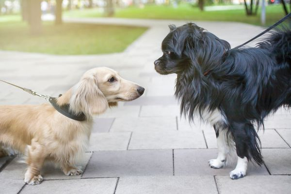 6 Expert Tips for Introducing Dogs to Each Other