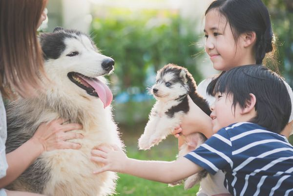 Family-friendly: 10 Best Dogs for Families