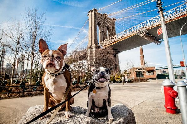 4 Best Dog Parks In New York City