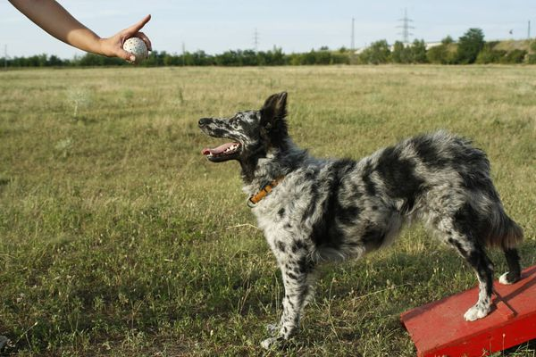 How To Teach A Dog To Stay? A Complete Guide On What To Do