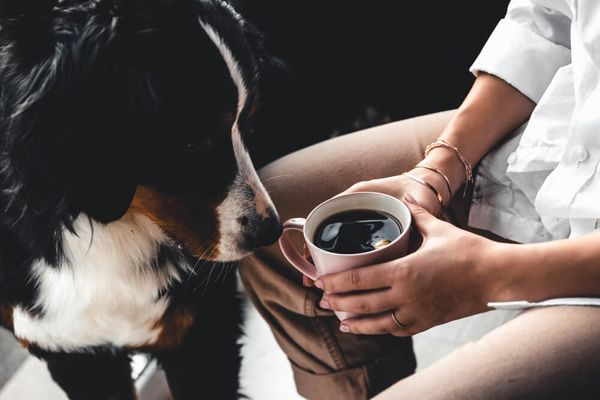 Dogs Drinking Coffee: Is Caffeine Safe for Dogs?