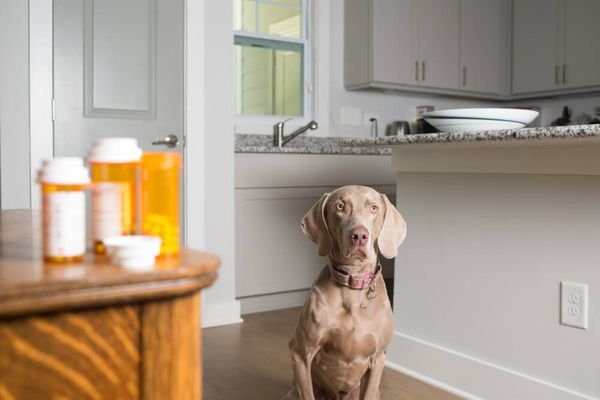 How To Get A Dog To Take A Pill: 8 Simple Tricks For Uncooperative Pups
