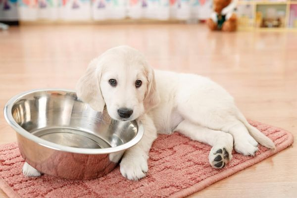 How Often To Feed Dogs: Feeding Schedule For Every Dog