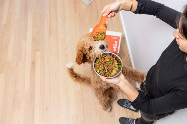 How Much Wet Food To Feed A Dog? An Expert Weighs In and Shares 4 Feeding Tips