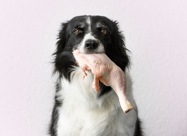 Is Turkey Good For Dogs? 4 Things to Know Before You Share With Your Pup