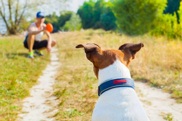 How Much Exercise Does A Dog Need? Best 5 Exercise Tips For Dogs