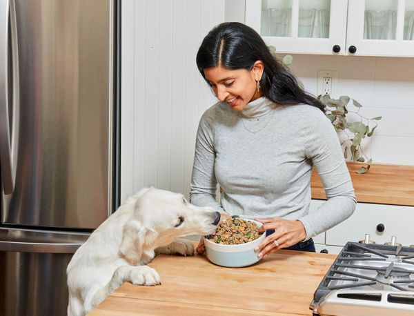 Best Foods for Your Dog's Digestive Health