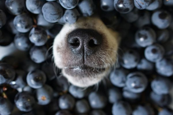Food for Thought: Key Ingredients to Brain Health in Dogs