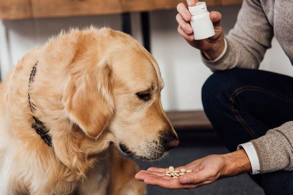 Popular Supplements for Dogs — Are They Worth it?
