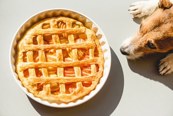 This Thanksgiving Isn't for the Birds—Tips for Celebrating with Your Dog