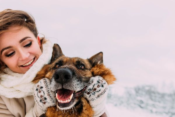 Ollie's Nose to Tail Guide to Winter Health and Wellness for Your Pup