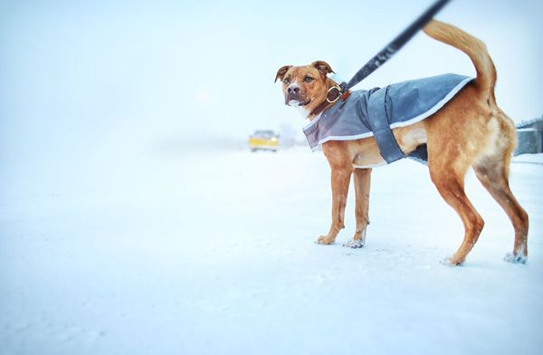 Do Dogs Need Winter Coats?