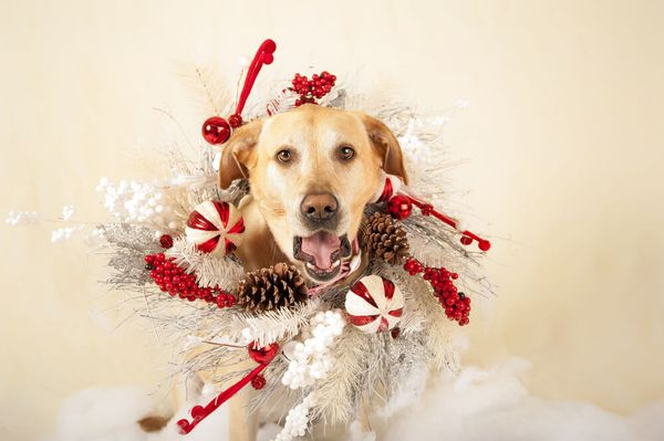 Protect the Halls: Dog-proofing Your Holiday Decor