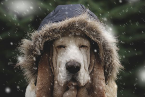 What to do if Your Dog Hates the Cold, Rain, or Snow