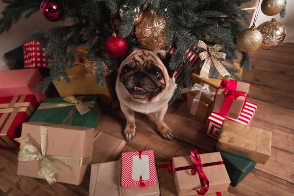 Ollie's 2020 Holiday Gift Guide for Dogs
