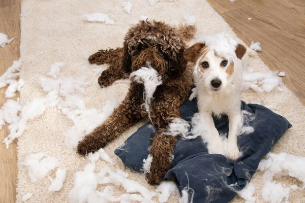 Puppy Proofing Your Home: 9 Steps to Keep Your Dog Safe