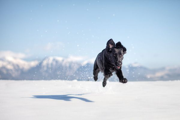 Dogs Decoded: Why Does My Dog Get the Zoomies?