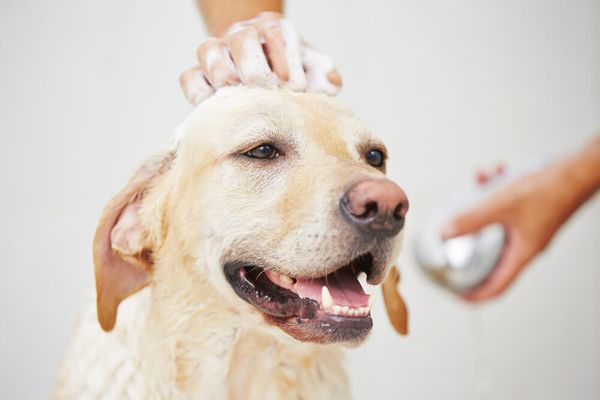 Pup Tune-up? Breaking Down Routine Maintenance for Dogs