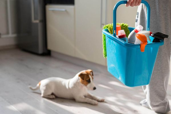 The Ultimate Spring Cleaning Guide for Pet Parents